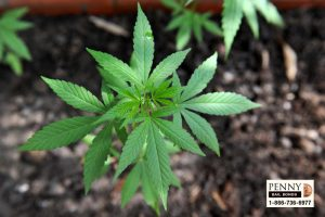 New California Marijuana Laws for 2018