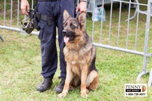 K9 Heroes in California Super Dogs