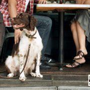 service dog laws in california