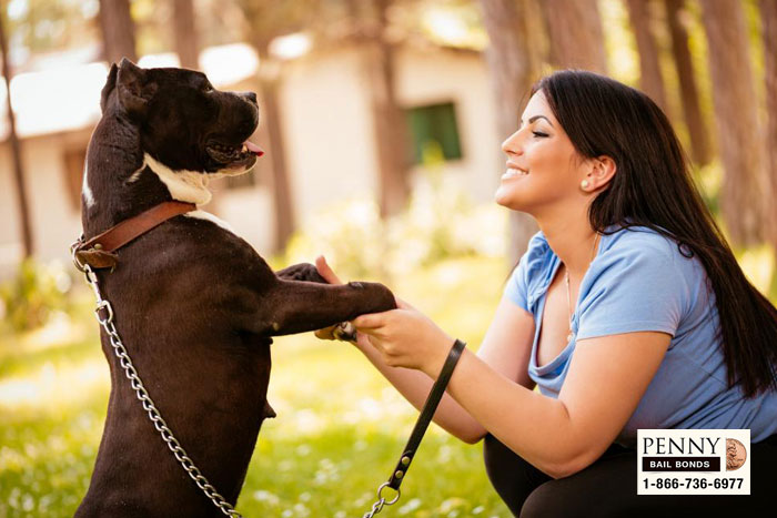 dog leach laws california