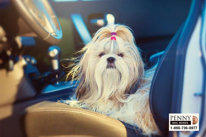 pet endangerment laws