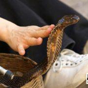 snake dangers
