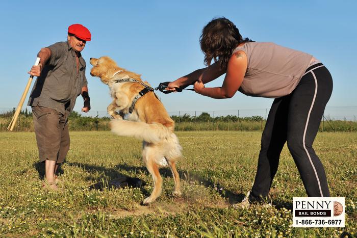 dog bite laws california
