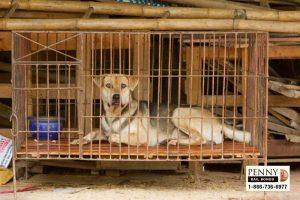 animal cruelty laws in california