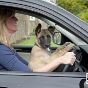 distracted driving with pet laws
