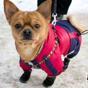 protecting your dog from cold weather