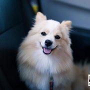 can you leave a dog in cold car san bernardino bail bonds