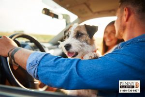 driving with dog in lap california laws